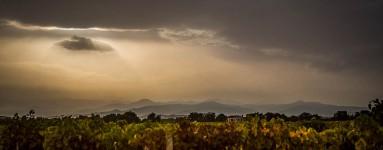 Canereccia photo report Aleria Corsica 2014